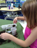 Students had to put five BIG spoonfuls of dirt into their cup first.